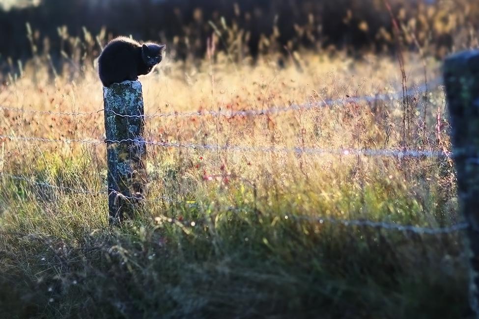 Navn:      0223-cat-ulf-greger-5d-zeiss.jpg Visninger: 775 Størrelse: 106.6 Kb