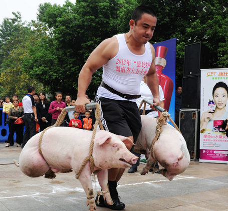 2020-05-18 20_10_17-lifting a pig – Google Søk.png
