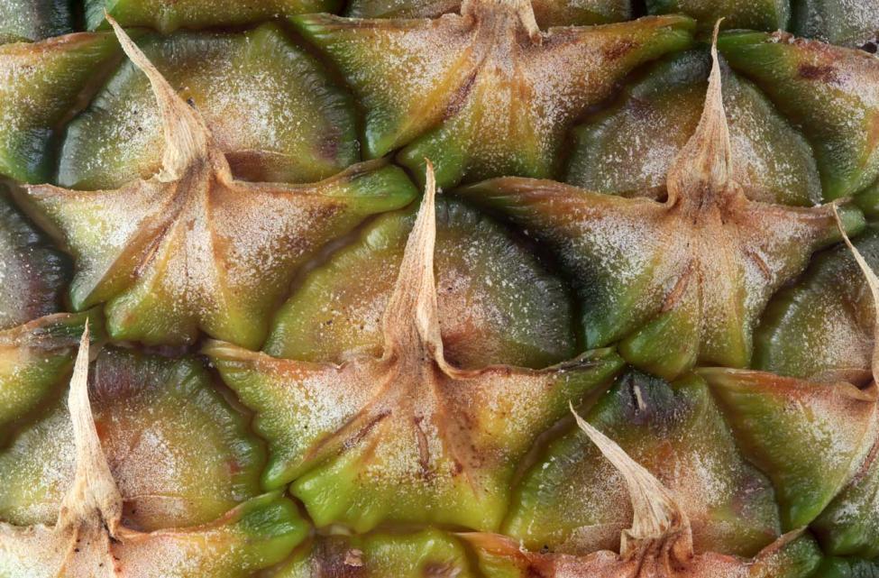 Ananas 1280.jpg