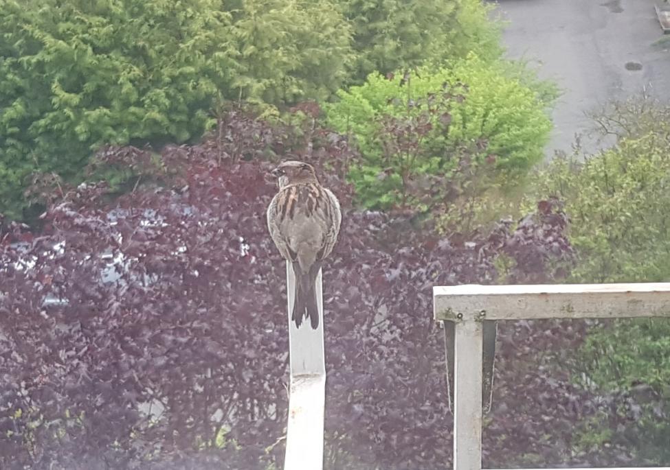 Balkong fugl (2).jpg