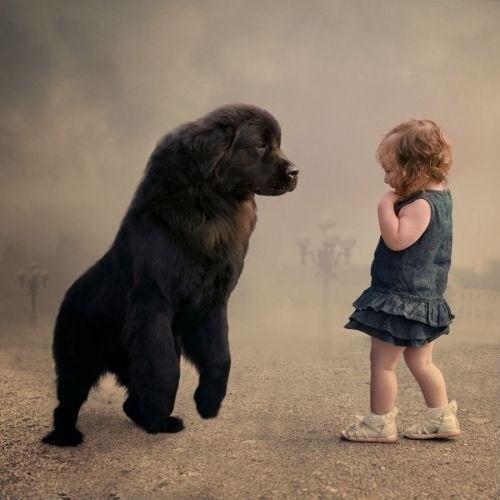 bb7fc868d21bd26e2338064c8a008001_weve-come-a-long-way-since-the-baby-and-newfoundland-dog-fight.jpeg