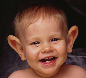 Navn:      big-ears.jpg Visninger: 695 Størrelse: 52.5 Kb