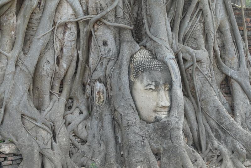 Navn:      buddsh i rot.JPG Visninger: 407 Størrelse: 388.6 Kb