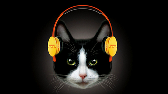 Navn:      Cat-Headphones-640.jpg Visninger: 3231 Størrelse: 75.0 Kb