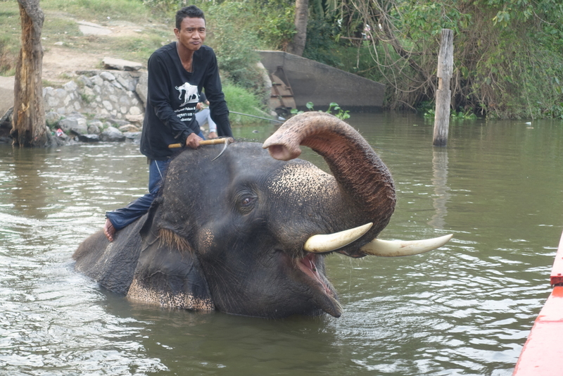 Navn:      elefant bad.JPG Visninger: 416 Størrelse: 394.0 Kb