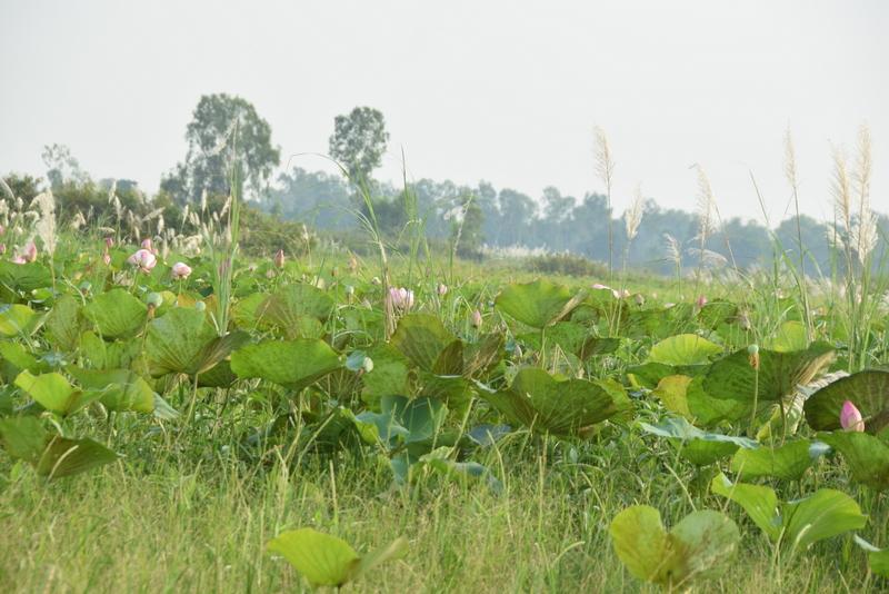 Navn:      lotus.JPG Visninger: 382 Størrelse: 282.8 Kb