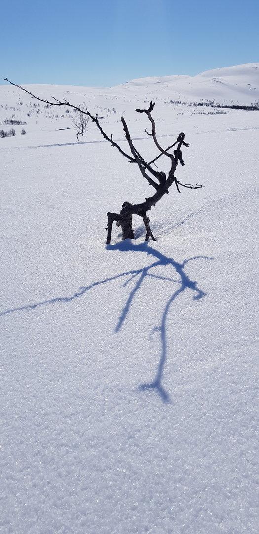 Naturens kunstverk.jpg