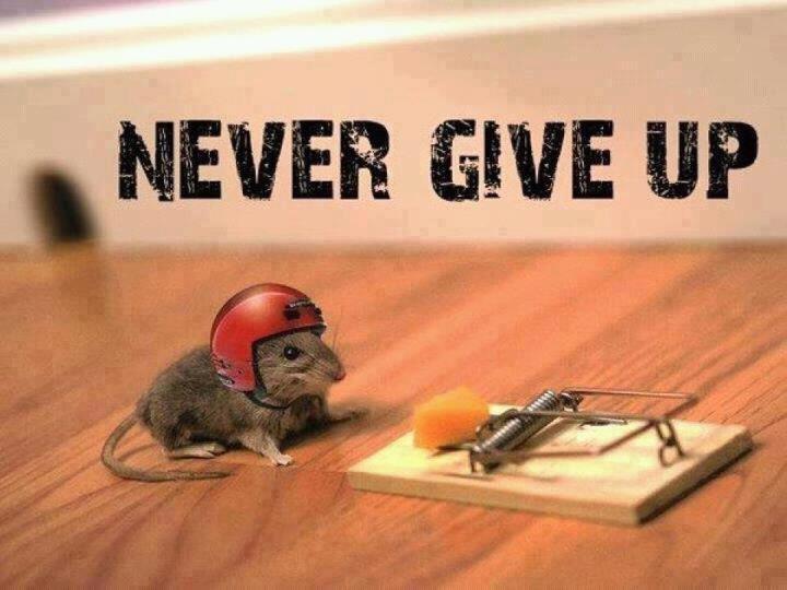 Navn:      Never give up.jpg Visninger: 285 Størrelse: 46.0 Kb