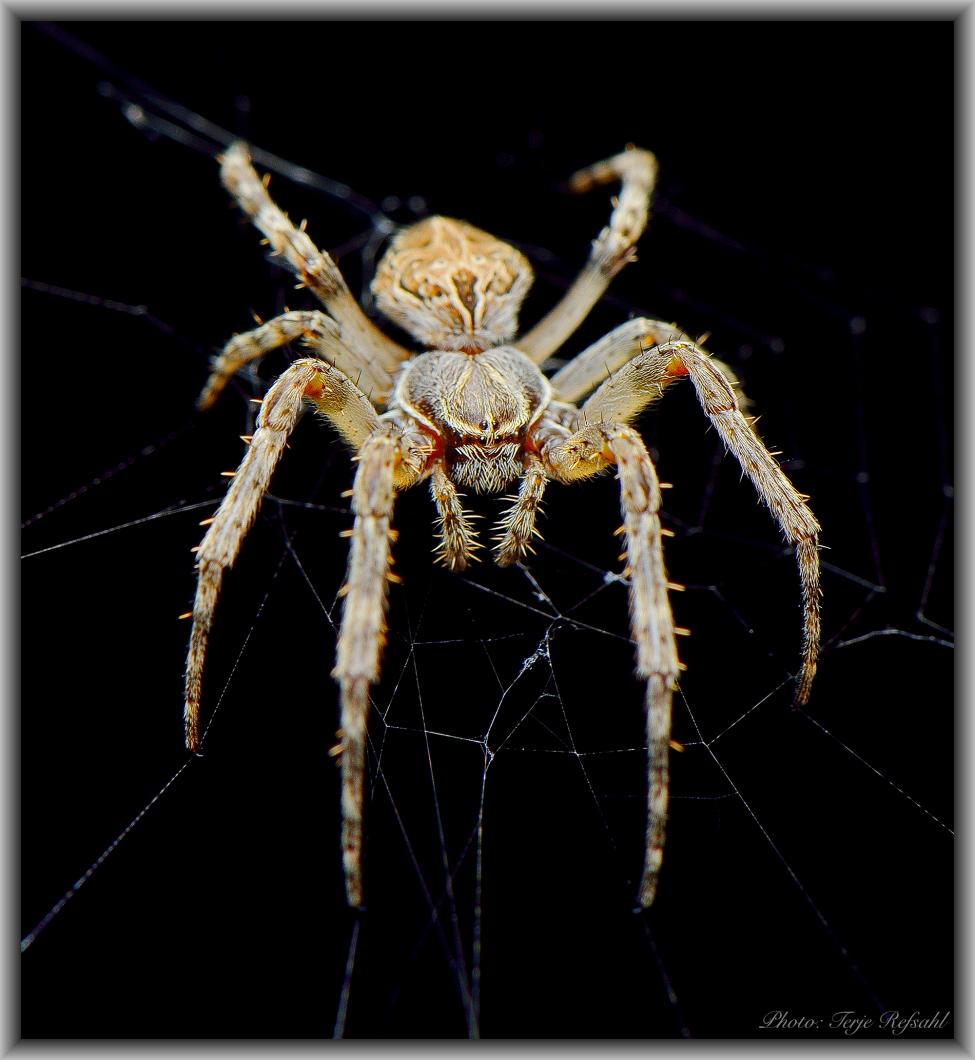 Navn:      Spider eyes kopi 1.jpg Visninger: 632 Størrelse: 91.5 Kb