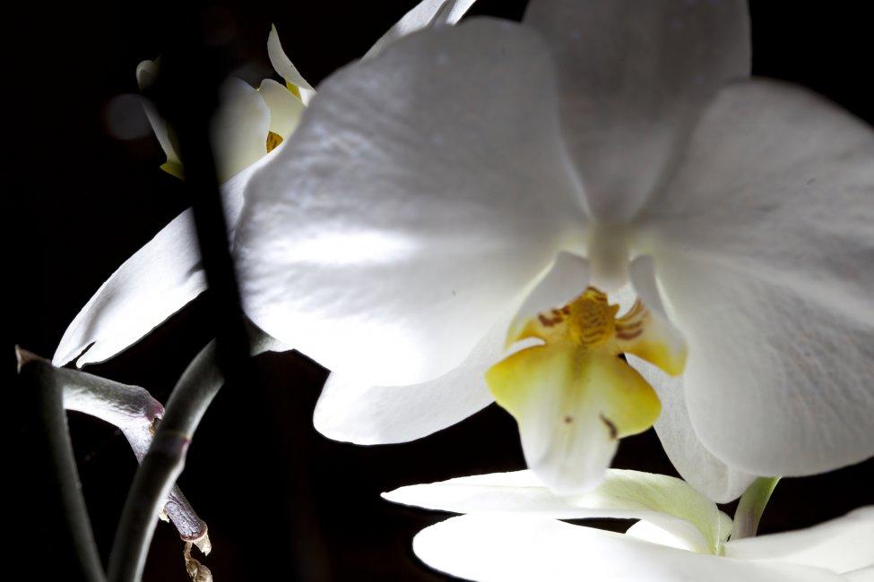 Navn:      Test blomst.jpg Visninger: 244 Størrelse: 52.1 Kb