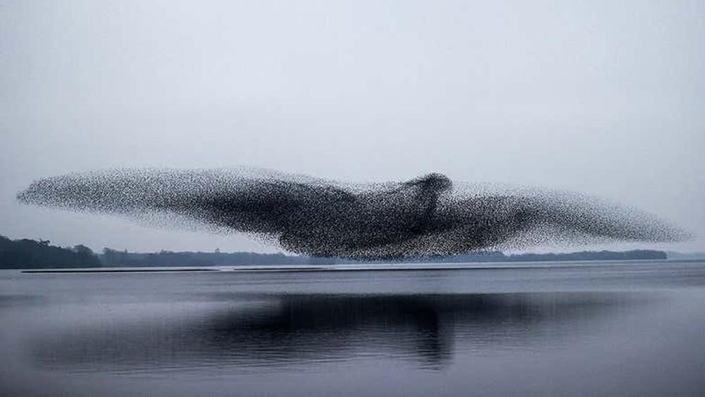Trekkfuglar danna gigantfugl på himmelen.jpg