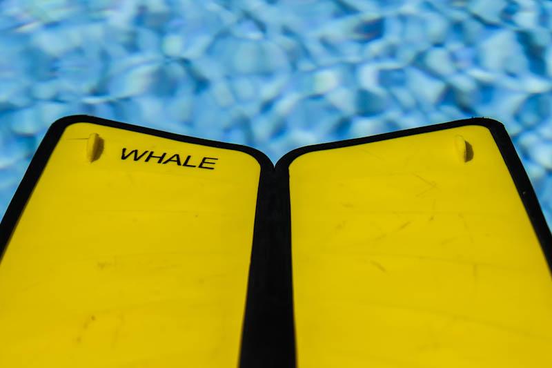 Navn:      whale-1.jpg Visninger: 596 Størrelse: 72.6 Kb